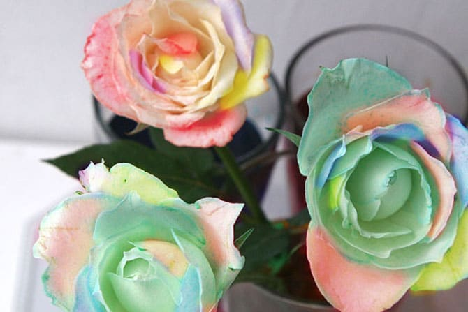 rosas-arco-iris_12