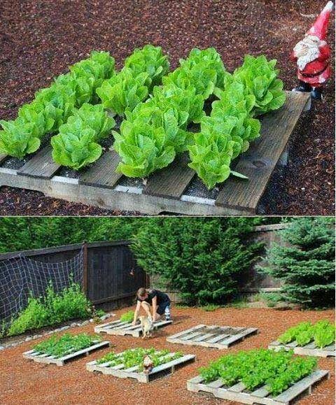 Ideias para o jardim com paletes 18