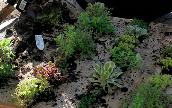 Como fazer um Jardim Vertical com Paletes de Madeira