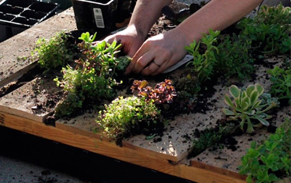 Como fazer um jardim vertical com paletes de madeira for Jardin vertical casero palet