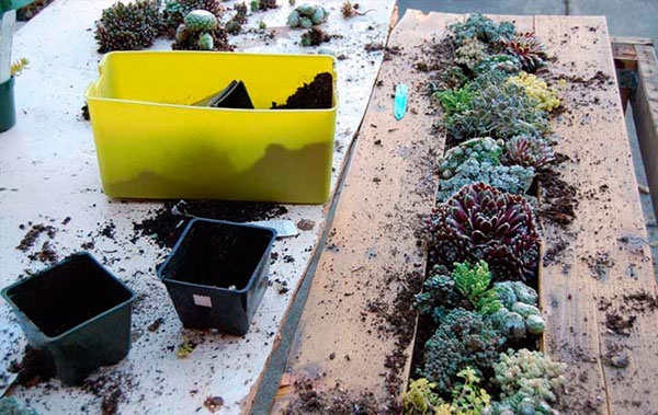 mesa-de-palete-com-mini-jardim-5