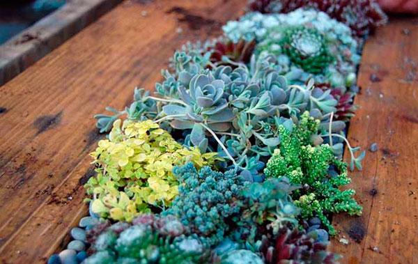 mesa-de-palete-com-mini-jardim-7