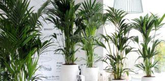 Como cuidar de plantas tropicais
