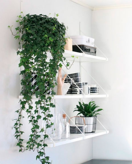 decoracao-com-plantas-1