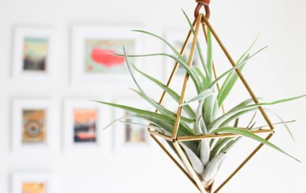 decoracao-plantas-4