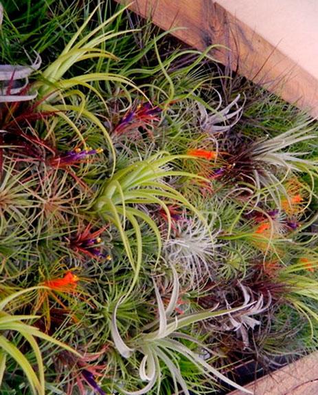 decoracao-plantas-7