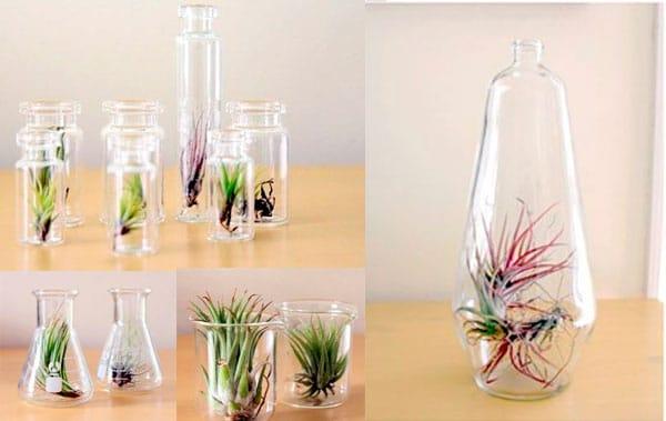 decoracao-plantas-8