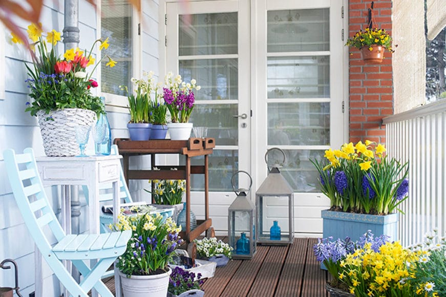 5 Plantas com flor para dar cor ao seu Jardim de Inverno